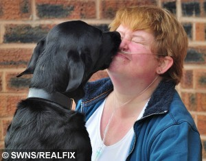 """Kate Arnett from Colwall, Herefordshire, with her two disability assistance dogs Ernie and Banjo, who woke Kate, after she slipped down her bed and lost her oxygen mask.  A disabled woman told yesterday (Tue) how her two dogs saved her life after they woke her up by LICKING her face when her oxygen masked slipped off.  See NTI story NTILICK.  Kate Arnett said she was given the """"lick of life"""" by pet pooches Ernie and Banjo who jumped on her bed in the early hours of the morning.  The 48-year-old requires an oxygen tank due to injuries she sustained when she was mown down by a car which mounted a pavement 28 years ago.  But on March 27  Kate's mask fell off while she slept next to her husband Gavin, 43, who was oblivious to the danger she was in.  Incredibly, sending something was wrong the two black Labradors leapt on the bed and started licking her face and pawing at her arms until she woke up.  Yesterday (Tue) Kate, from Malvern, Worcs., revealed how she had been just hours from death if it hadn't had been for the actions of her hero dogs."""