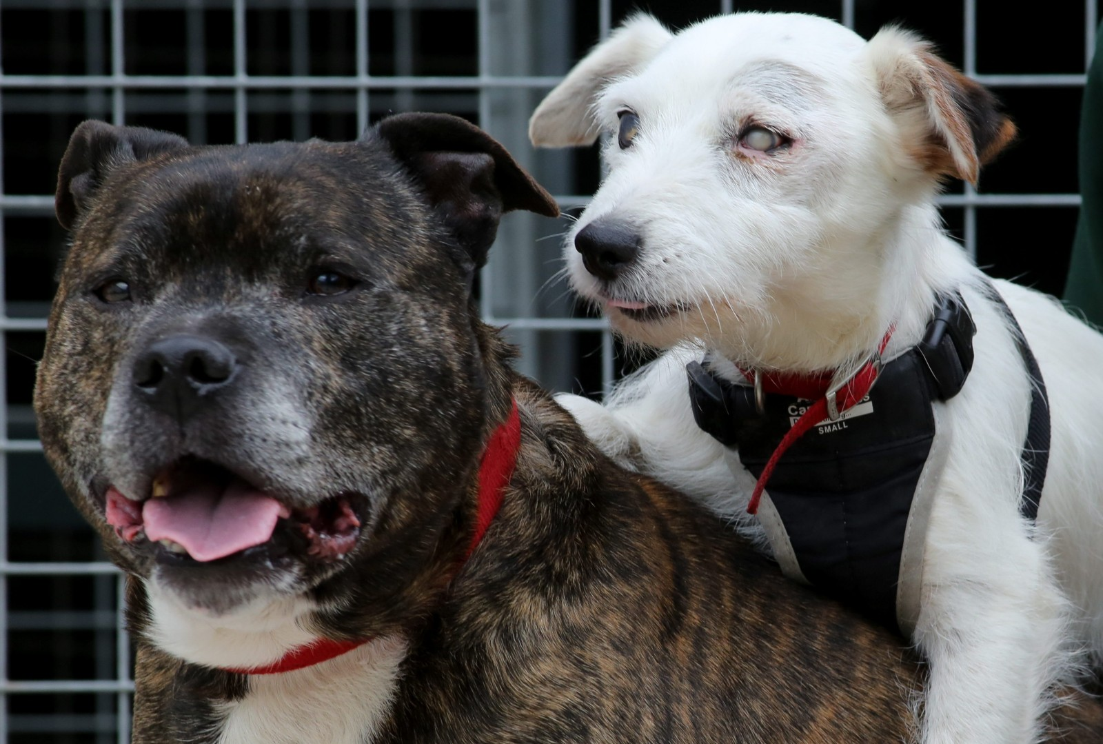 The amazing reason why these two abandoned dogs MUST stay together