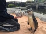 Penguin celebrates birthday with happy feet thanks to wearing elastic PANTS