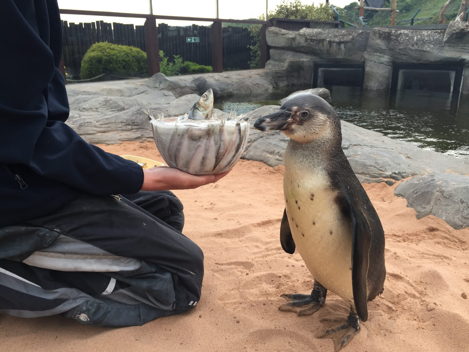 Penguin celebrates birthday with happy feet thanks to wearing elastic PANTS