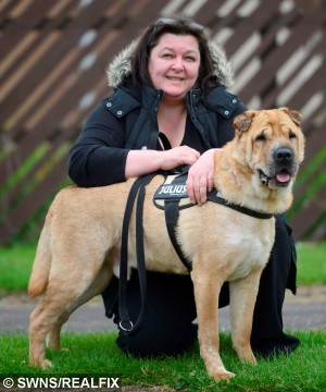 Kai the Shar-Pei with its carer Laura Cumming, from Saltcoats, Ayrshire, Scotland, after it was found in Hungary. See SWNS story SWKAI: A Shar-Pei named Kai is looking for a home in Scotland after he was dumped by his owner. But Kai wasn't found with a bag of belongings at Ayr Train Station - he was discovered more than 1,000 miles away in Hungary. Emaciated and in pain after his owner callously tied him to a tree in the middle of a forest, Kai was close to death. He was eventually found and moved to a Hungarian kill shelter and faced death when Shar-Pei Rescue and Support Scotland heard about him.