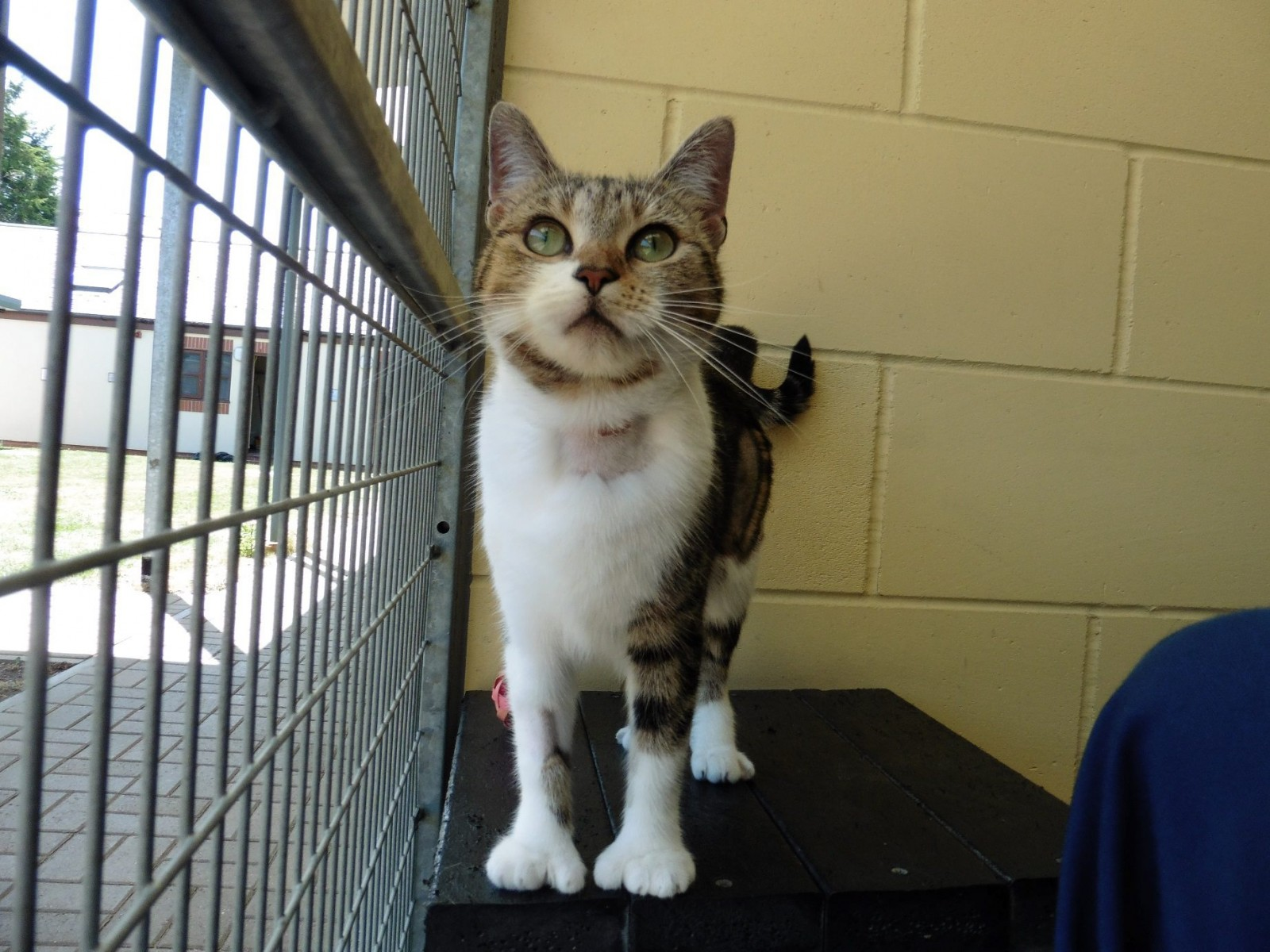 Extra special Sheila! Fancy adopting an abandoned cat that has THUMBS?