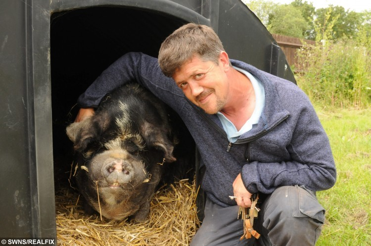 Andy Cowell with Spice the Kune Kune pig at The Fenn Bell Inn, St Mary Hoo, Kent.See MASONS story MNZOO: A couple have turned their pub's beer garden into a mini zoo, complete with monkeys, parrots, racoons and a pig with arthritis. Andy and Kelly Cowell took over the 17th century Fenn Bell Inn last December when they saved it from closure. They previously ran a farm with around 200 animals and transferred many of them to the pub in St Mary Hoo, Kent. They have now opened the first zoo in the area with a collection of animals including  marmosets, squirrel monkeys, a coati and a south American raccoon. Others include kunekune pigs, great grey owls, geese, chickens and they are hoping to move some macaws in soon. The Fenn Bell Inn, Fenn Street, St Mary Hoo. Animals at the zoo. Andy Cowell with Spice the Kune Kune pig. Picture: Steve Crispe FM3883301