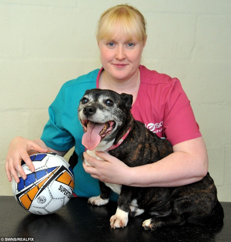 Netta after having the football sized tumour removed - The ball is the approximate size of the tumour - Pictured with vet Laura Cartlidge.  A 3kg tumour the size of a football was removed from a small dog after her owner made a vet appointment thinking her pooch had put on weight and needed to go on a diet.  See NTI story NTIDOG.  Worried owner Angela Ravenscroft (47) had noticed Netta was looking larger around the middle. SheÃd been sick overnight and seemed distressed. Angela took her along to the vets thinking that sheÃd get some advice on how to put her on a diet.  She was shocked when they said it was a tumour on her spleen. When vet Laura Cartlidge started to remove the tumour everyone was shocked at just how large it was. It was the size of a small football, was 30cm in diameter and weighed over 3kg, it was one of the biggest tumours that Laura had ever seen.