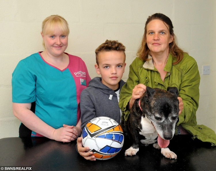 Netta after having the football sized tumour removed - Pictured with owner Angela Ravenscroft (R) her son Bradley and vet Laura Cartlidge (L).  A 3kg tumour the size of a football was removed from a small dog after her owner made a vet appointment thinking her pooch had put on weight and needed to go on a diet.  See NTI story NTIDOG.  Worried owner Angela Ravenscroft (47) had noticed Netta was looking larger around the middle. SheÃd been sick overnight and seemed distressed. Angela took her along to the vets thinking that sheÃd get some advice on how to put her on a diet.  She was shocked when they said it was a tumour on her spleen. When vet Laura Cartlidge started to remove the tumour everyone was shocked at just how large it was. It was the size of a small football, was 30cm in diameter and weighed over 3kg, it was one of the biggest tumours that Laura had ever seen.