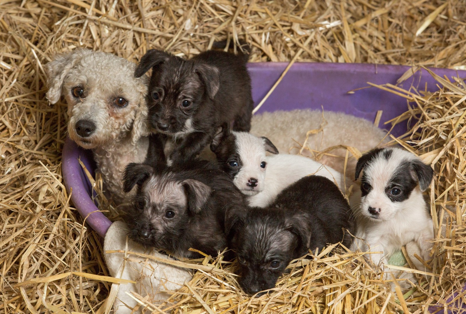 The adorable tale of the abandoned puppies and a mysterious 'Ghost Dog'