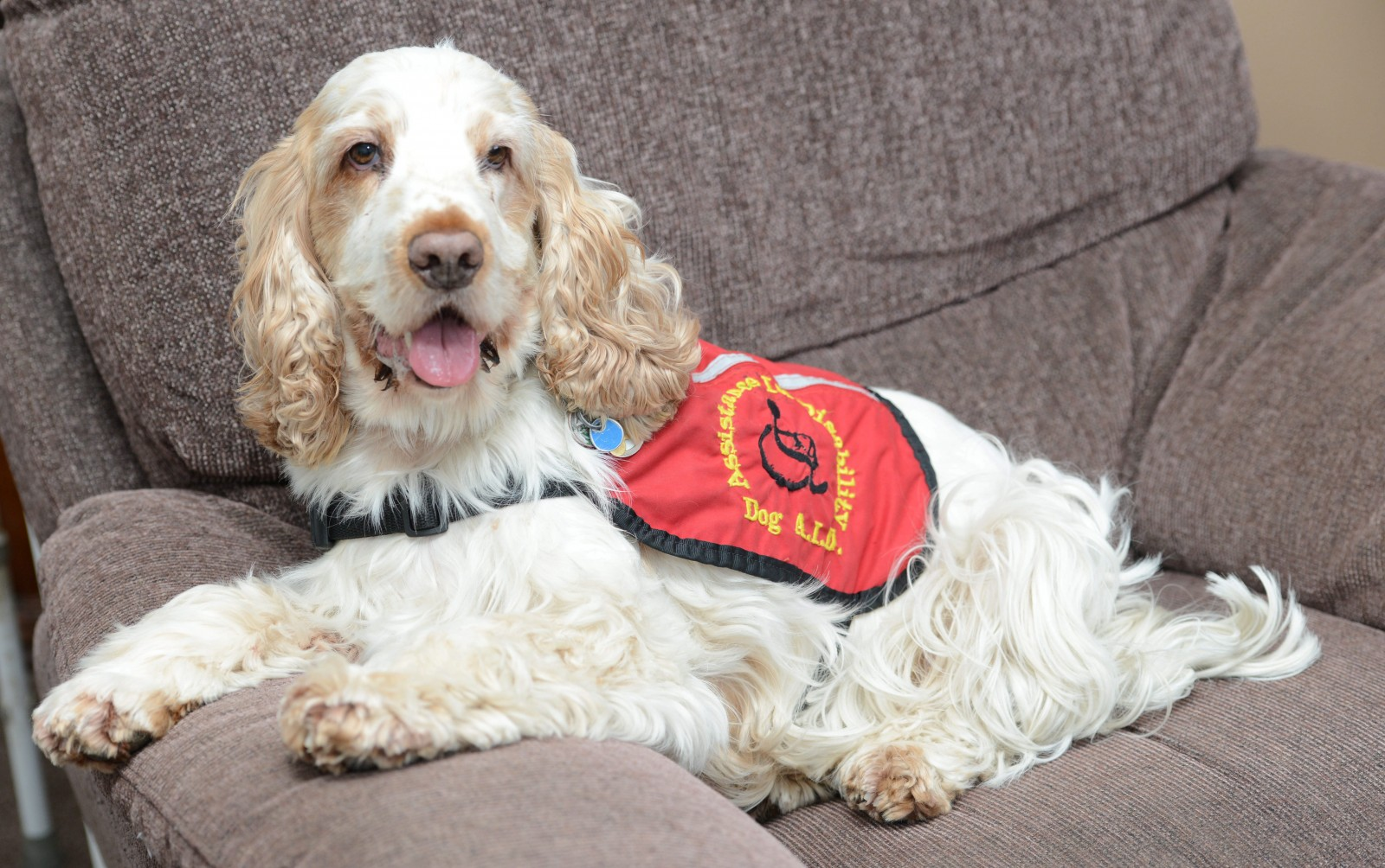Wonder dog George wins a canine OBE for doing something INCREDIBLE!