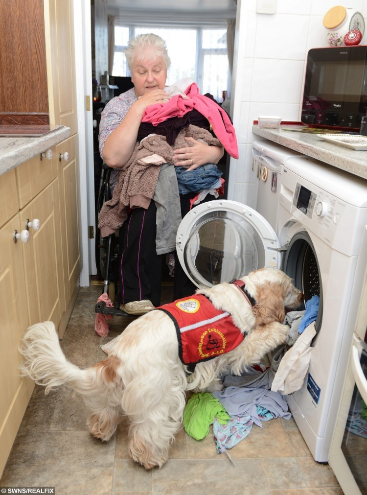 Pictured - Anita Castellina of Thornton-Cleveleys, Lancs., with George the dog. See Ross Parry Copy RPYHONOUR : A pooch has been awarded a doggie OBE for saving the life of his owner when she got trapped beneath her mobility scooter in a ditch of freezing water.Disabled Anita Castellina, 62, was unable to move or call for help when she rolled the carriage after swerving to avoid children riding on skateboards. But help was at hand when wonder dog George the Spaniel paw-sed for thought and went to fetch help before returning to her side to keep her warm. His heartwarming response has been recognised by the PDSA who have awarded him the prestigious Commendation for animals who have saved or enriched the lives of their companions. Thomas Temple/rossparry.co.uk