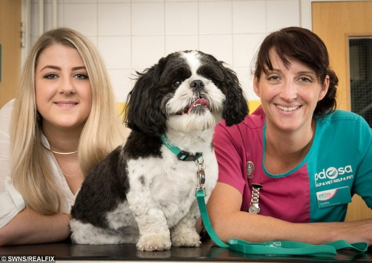 PDSA vet nurse Caroline Watson(R) with cheeky Alfie and owner Jade Bird (L)See SWNS story SWSPONGE; A dog had his life saved by vets after swallowing - a whole kitchen SPONGE and scourer. Little Alfie, a 20 month old Shih Tzu,  was keeping his owner Maria Bird, 53, company as she cleaned the bathroom. He grabbed a clean sponge from the packet and swallowed it whole. The tiny pooch seemed fine but concerned owner Maria knew it could cause him some serious harm.
