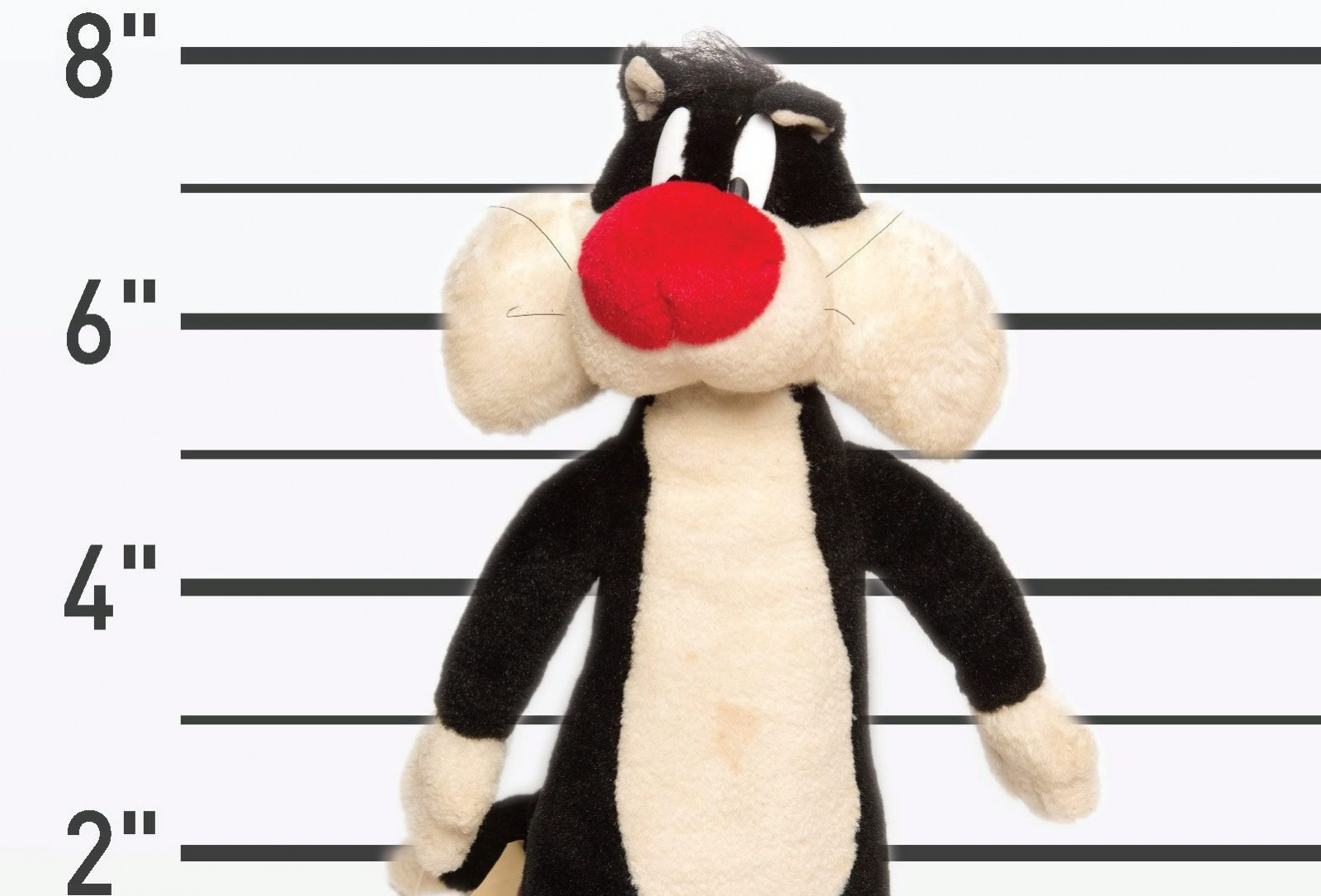 Recognise anyone in this line up?: Help these cuddly toys find their way home!