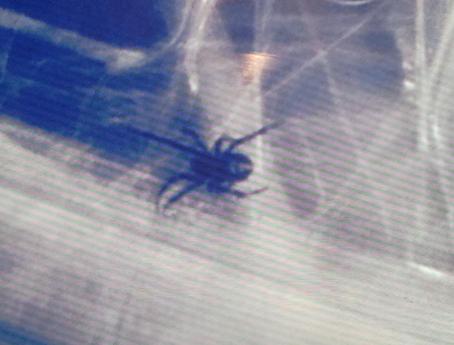 Hate spiders? Then you might want to know where this was found…