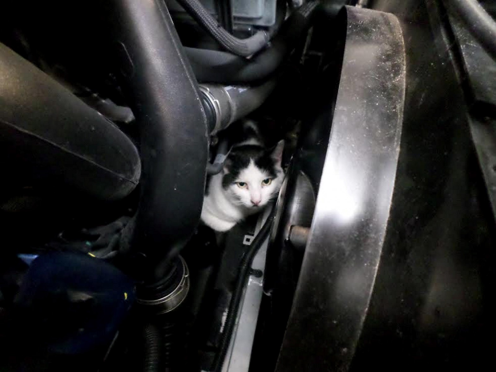 Cat survives a 150-mile journey trapped inside a car engine!