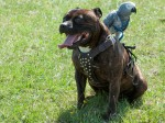 Unlikely friendship of Crackers and Pirate dog is the 'squawk' of the town!