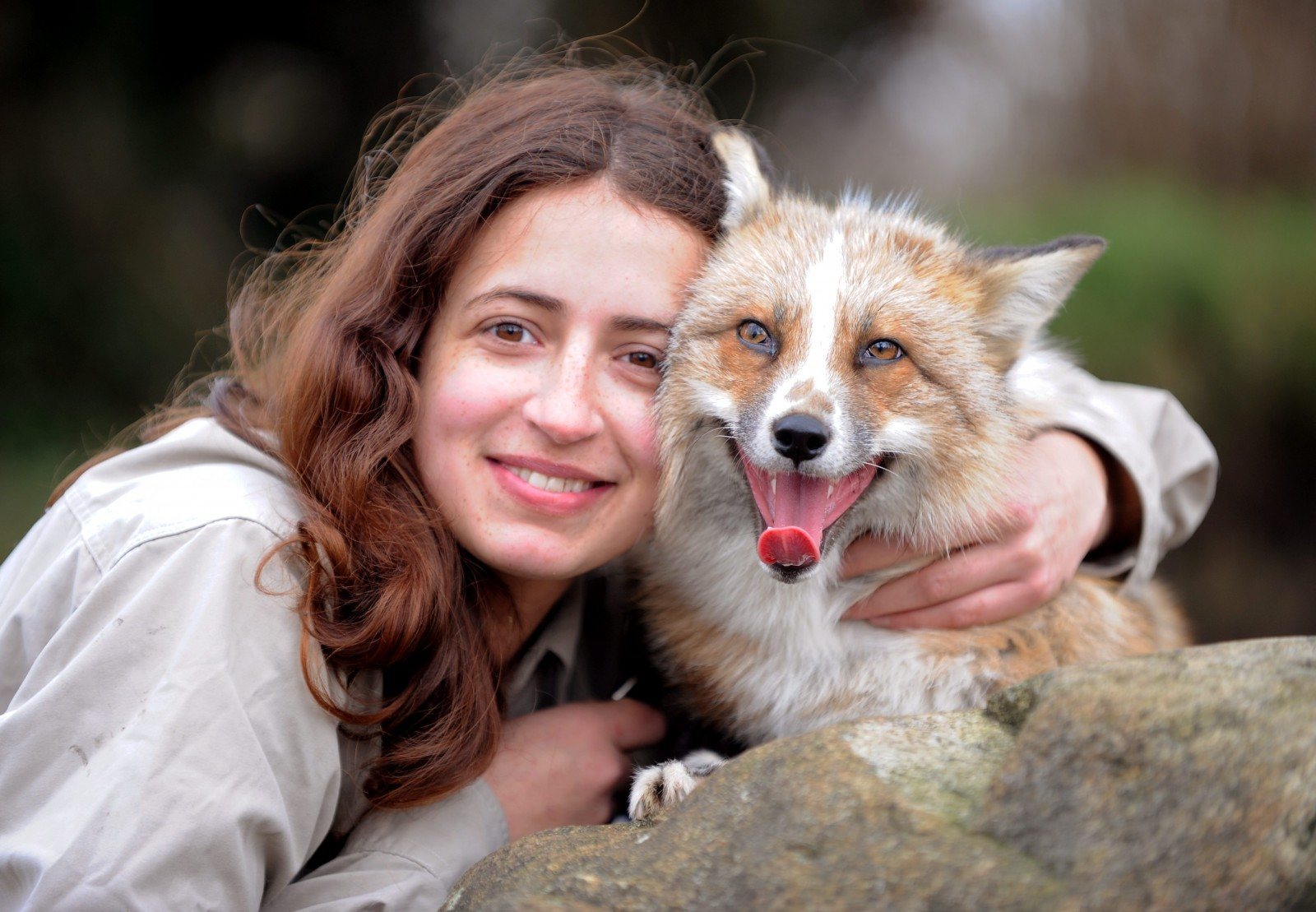 The fox who loves having his belly tickled and going for walks on a lead