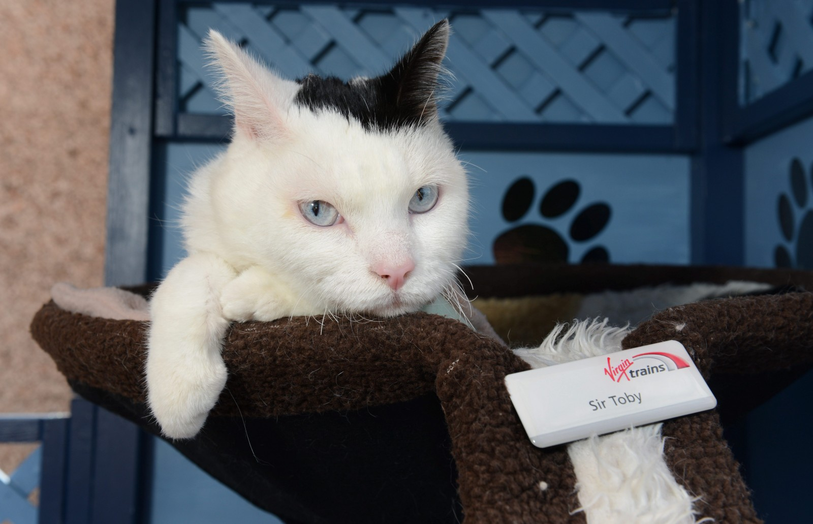 Meet Sir Toby Toblerone! The quadriplegic cat recruited for a very special role on the railways