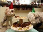 You'll melt when you find out why these adorable pups had a doggy tea party