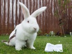 'Wonky' Alice in Wonderland bunny is abandoned with a heartbreaking note