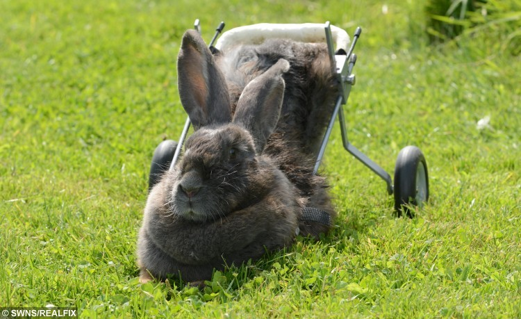 Bertha's devoted owner created a specially-designed wheelchair to give her a new lease of life.