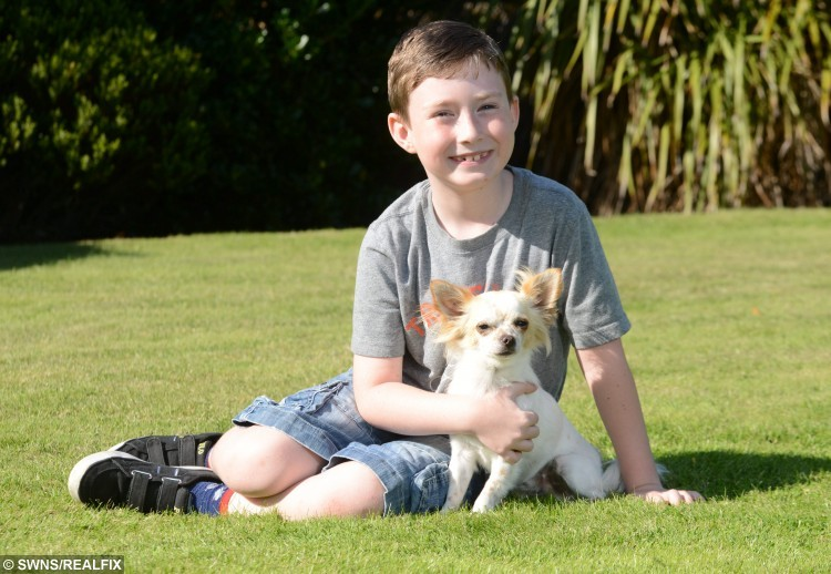 Tommy Jones from Southport, Merseyside, with his dog Bobo. See SWNS story SWCUTE: A disabled boy and his lame puppy are a real pair of superheroes à after they helped each other learn how to WALK. Doctors feared little Tommy Jones, eight, would never be able to walk, after a birth complications left him semi-paralysed. So when his parents Kerry and Mike Jones heard about a Chihuahua puppy who had a badly broken leg, they decided that nurturing the little pup à named Bobo à may help their son deal with his own infirmity. Tommy, who was five at the time, and Bobo soon became best of friends, and miraculously, within weeks of meeting, they both started walking.