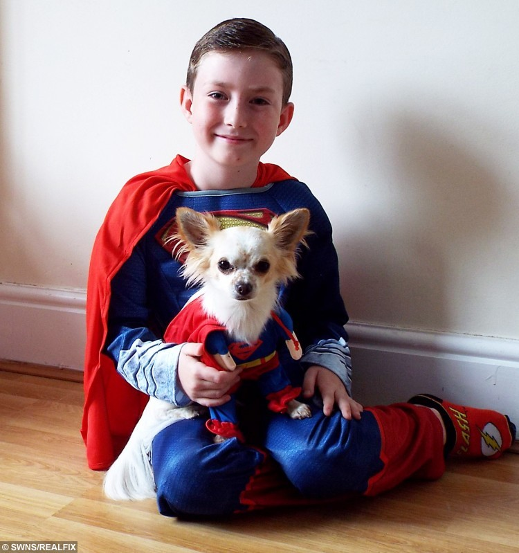 Tommy Jones from Southport, Merseyside and his Chihuahua Bobo in their matching costumes. See SWNS story SWCUTE: A disabled boy and his lame puppy are a real pair of superheroes à after they helped each other learn how to WALK. Doctors feared little Tommy Jones, eight, would never be able to walk, after a birth complications left him semi-paralysed. So when his parents Kerry and Mike Jones heard about a Chihuahua puppy who had a badly broken leg, they decided that nurturing the little pup à named Bobo à may help their son deal with his own infirmity. Tommy, who was five at the time, and Bobo soon became best of friends, and miraculously, within weeks of meeting, they both started walking.