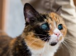 After being rejected over her 'terrifying' eyes Pops finally finds a home!