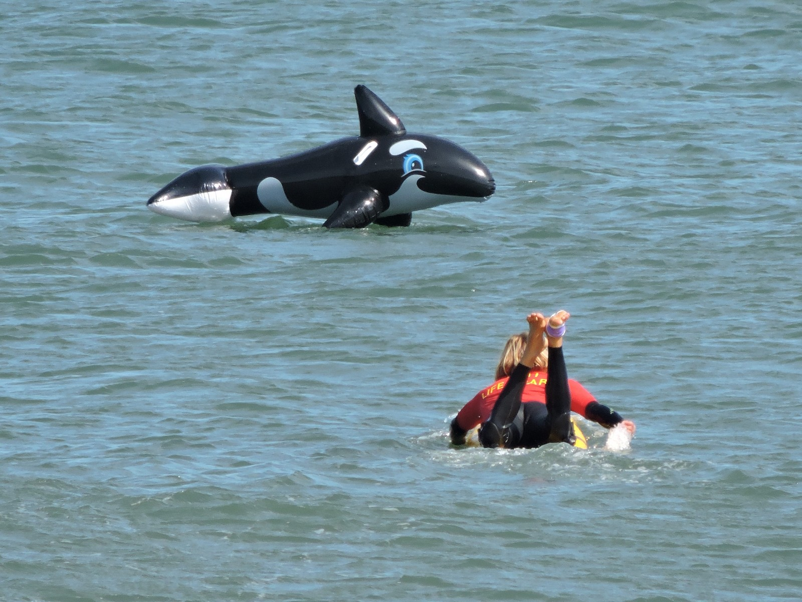 Lifeguard dramatically rescues a stranded killer whale!