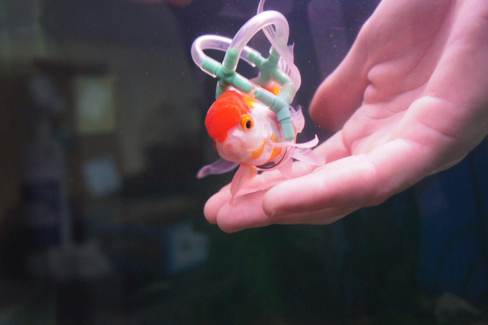 Owner invents a tiny life jacket to help his disabled goldfish swim!