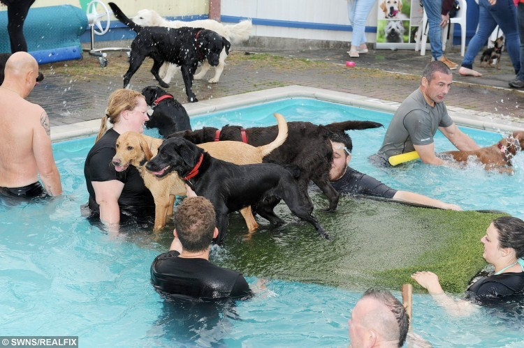Dogs and owners swimming session at Heckington Swimming pool.  A village swimming pool has started offering animal-lovers the chance to take a dip - with their DOGS.  See NTI story NTISWIM.  Heckington Community Swimming Pool near Sleaford, Lincs., originally came up with the idea to allow pet owners to make a splash with their canine companions as a joke.  But after it proved a huge hit last month the facility has decided to hold their  'Doggy Dip' sessions three times a month. Since then up to 20 dogs and their owners have been turning up at each session to pay Ã5  a time to take their pooches for a doggy paddle.