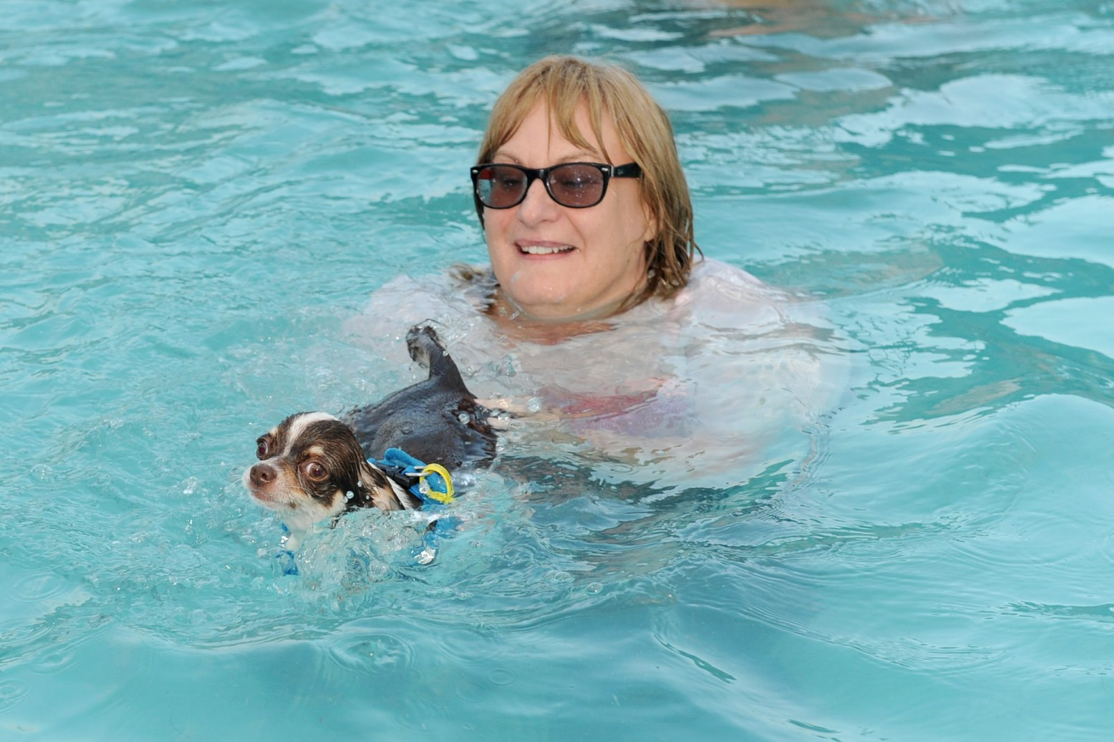 This pool is taking doggy paddle to a whole new level!