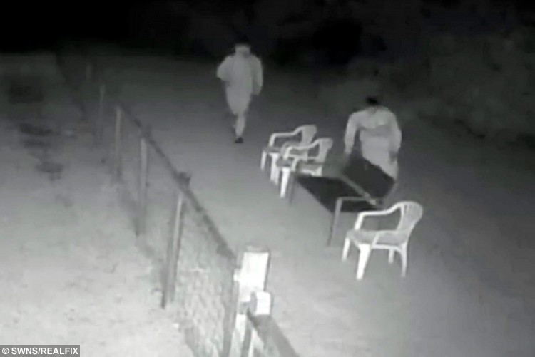This shocking CCTV shows the moment cruel thugs attacked defenceless alpacas in the dead of night. See Ross Parry copy RPYALPACAS : Elderly brothers Bill and Ben were terrified when the yobs threw plastic chairs at them as they were relaxing in their field. One of the two men also threateningly chased the animals with a broken leg from one of the chairs. Bill and Ben, who have lived at the nursing home in Rossendale, Lancs., for five years since they were born, luckily escaped unscathed.
