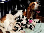 Bumper Basset Delivery! No one was expecting this at all…
