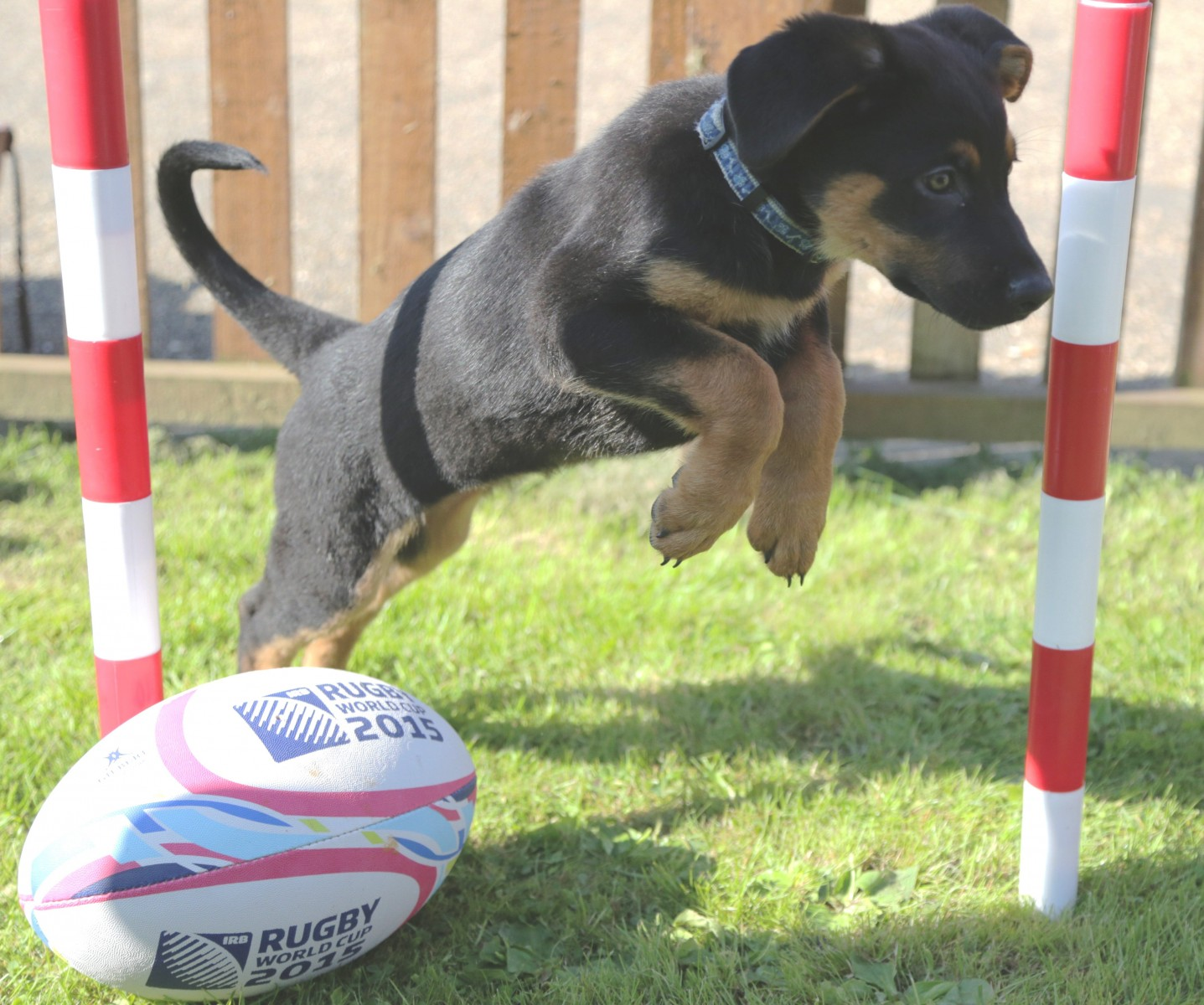 Adorable pups named after England rugby squad to attract some very special fans