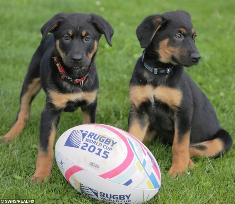 England Rugby Player Mad Dog: Adorable Pups Named After England Rugby Squad To Attract