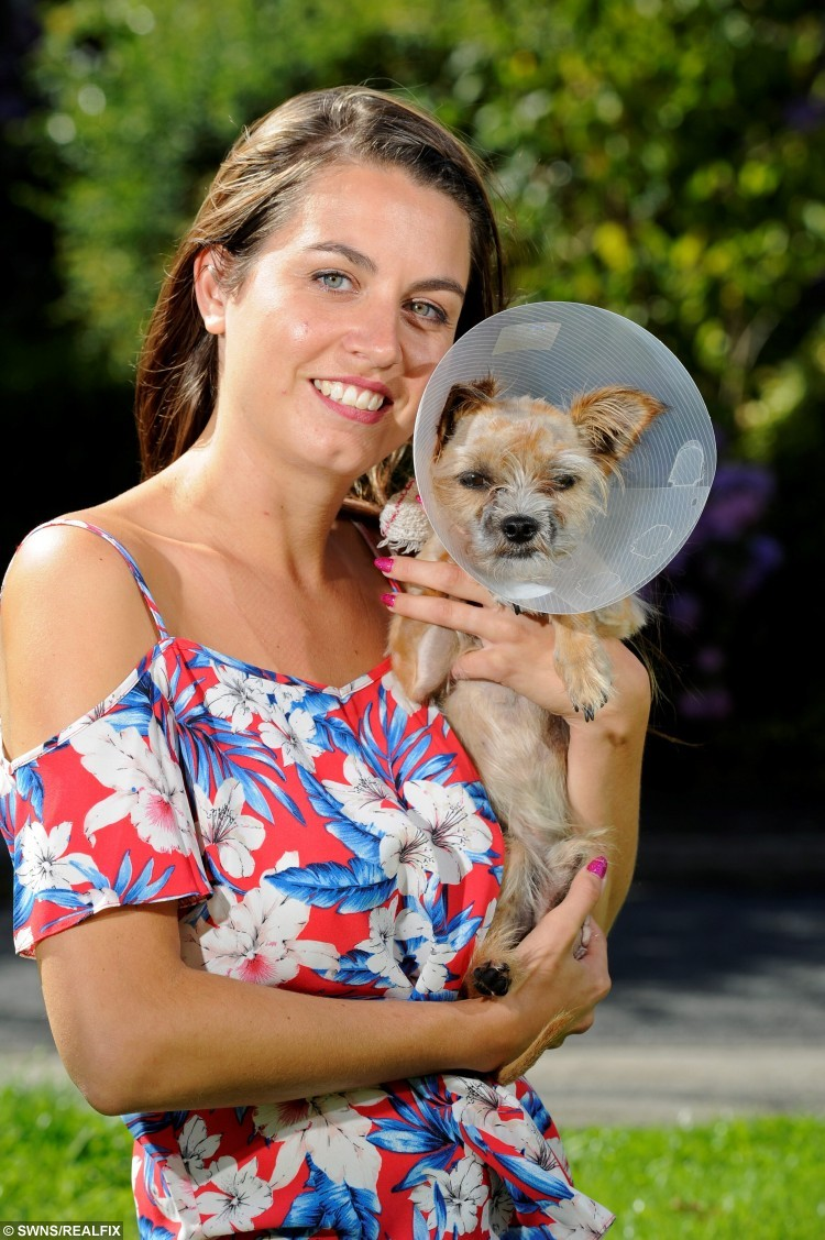 Becky Lamb reunited with Max, a Yorkshire terrier cross, after he was found lying on a pavement next to a bridge by a woman who recognised him from a Facebook appeal which reached thousands of people. See Ross Parry copy RPYDOG : Max the miracle dog survived a ruff four-day ordeal as he dragged himself to safety after going missing and being hit by a train. Despite losing a leg in his ordeal, the two-year-old chorkie - a Yorkshire terrier and chihuahua cross, showed dogged determination in his fight for survival. Unknown to the poorly pooch a Facebook appeal had been launched by his worried owners and a woman who had seen the appeal had spotted him on a footpath by a railway bridge. Vets told MaxÃs owners, the Lamb family, from New Farnley, Leeds, West Yorks., that his back left leg had been severed in a clean cut and was probably the result of him being struck by a train.