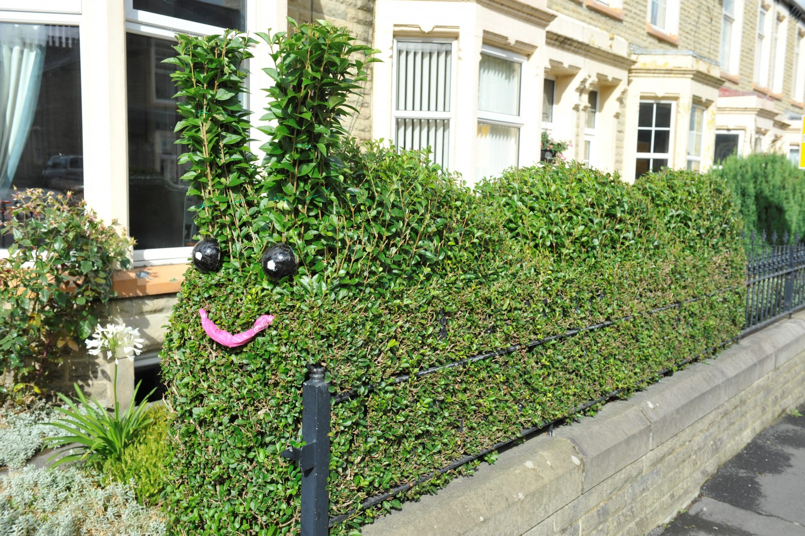 The hedge that can't fail to make you smile!