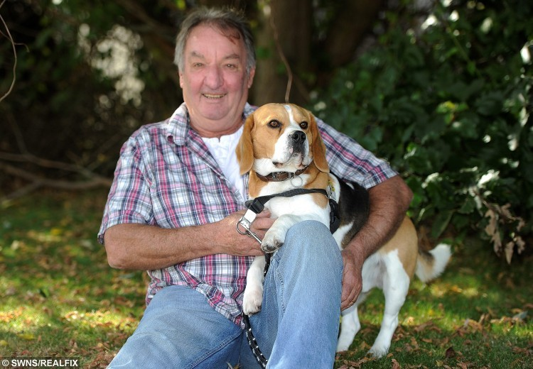 Frank Rowe from Newhaven, Edinburgh, reunited with his dog Bertie. Mr Rowe had his car stolen with his beagle in the back. See Centre Press story CPDOG; A pensioner whose dog was stolen during a carjacking has been reunited with his beloved pet. Frank Rowe, 65, was fixing a motorcycle near his home on when a gang of teenagers approached and pushed him to the ground on Friday. He tried to stop the thugs, but one drove away in his Honda CRV while his pet dog Bertie was trapped inside.  Frank feared he would never see two-year-old beagle again and was hugely relieved when the dog was found unharmed around a mile away that afternoon.