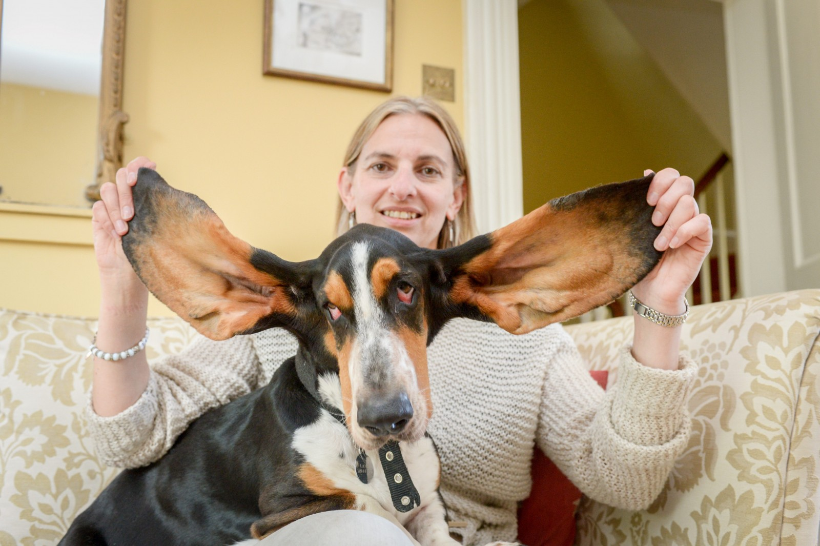 Basset Hound survives fall from third-floor window thanks to his huge EARS