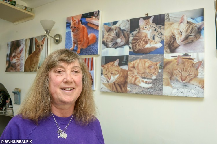 June Fraser, 52, from Worcester Park in south west London with pictures of her ginger rescue cats. A self-confessed Ãcrazy cat ladyà has opened up BritainÃs first sanctuary à for GINGER TOMS.  See SWNS story SWGINGER; June Fraser has had a fondness for ginger cats since her father bought surprised her with one when she was two years old à and now canÃt stop collecting the adorable pets.  For the past two years, she has begun nursing injured cats back to health - because she reckons poor ginger cats are subject to more abuse than others à and now has TEN.  June is not sure why all of her cats have been the subject of abuse, but wondered if it was similar to the treatment ginger children face at school.