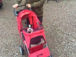 Miniature teacup puppy is so fragile from birth defect he has to travel in a pram!