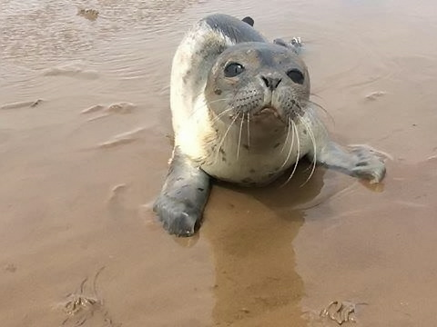 This was a big day for five adorable orphaned seals!
