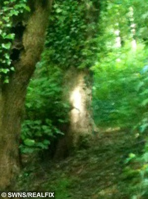 The picture taken by Elaine Stewart with what she believes is the ghost of a small boy. See NTI story NTIGHOST; A great-great gran was left spooked when she took a picture of a beauty spot and captured this eerie snap of an 18th century child ghost. Shocked Elaine Stewart, 65, was taking a woodland walk when she took a picture on her iPhone 3 but only discovered the scary image when she returned home. The picture, taken in Wasson Pool, in the Black Country last month, appears to show the outline of a boy wearing 18th century clothes leaning against a tree. Retired auxiliary nurse Elaine, from West Bromwich, West Mids., has researched the area and discovered the woodland is on the site of an 18th century coal mine.