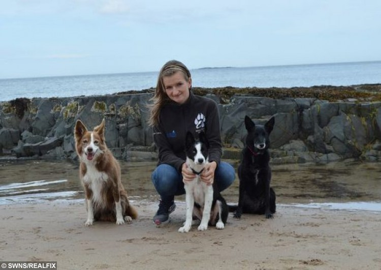 Nicola Wildman from Blackpool, Lancs., with (L-R) Mynx, Fluffy and Zoom. See Ross Parry Copy RPYAGILITY : ItÃs not every day a 10-year-old Aussie is named a champion of England. And it's certainly not every day the Ãyoungsterà turns out to be 70 - in dog years at least - with a name like Zoom. The athletic Australian Kelpie - a type of sheep dog - emerged victorious from two rounds at the challenging Nations Cup, seeing off competition from around the globe with her teammates Rogue and Dolly. Zoom has also qualified to run in two Discover Dogs agility events in London next month, the London International Horse Show at the Olympia in London in December, and at Crufts next March. Her proud master and trainer, Blackpool woman Nicola Wildman, described her as ÃamazingÃ. 6 October 2015.