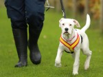 Deaf puppy who learns commands through sign language needs a home!