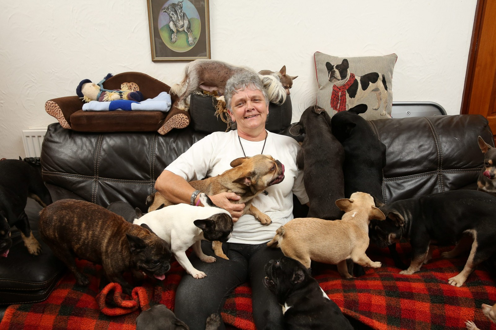 Barking Mad! Woman lives with her husband and their 41 DOGS