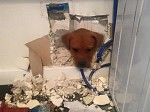 Moment playful puppy gets her head stuck in a WALL!