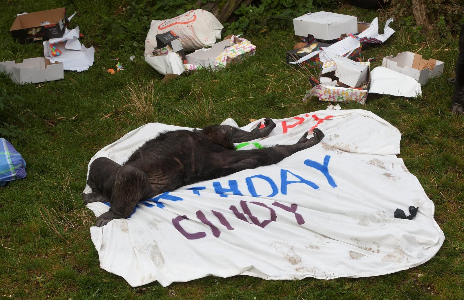Monkey mayhem at the zoo as Cindy celebrates her 50th birthday!