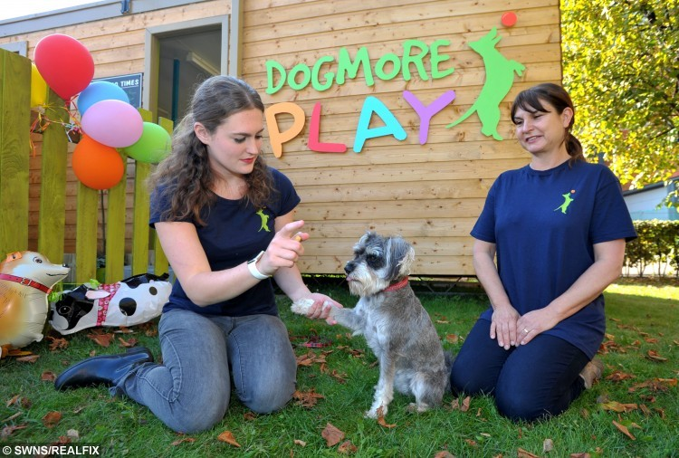 DogMore Play is a new dog creche that has opened this week at the Ocean Terminal shopping centre in Leith, Edinburgh. Pictured is (left to right) manager Amy Ruickbie, Skye the miniature schnauzer and owner Sue Shihor. See Centre Press story CPCRECHE; Dog lovers won't have to tie up their pets outside shops any longer after the first creche at a Scots shopping centre opened its doors to the public.The play area for pooches is located at one of the busiest centres in the country and hopes to encourage shoppers to leave their dogs to play. Dogmore Play opened its doors at Ocean Terminal in Edinburgh last month and has already welcomed a number of small pets for their daily play fix. It is hoped that the creche will encourage owners to stop using leaving their dogs in the car but instead allow them to roam free in a safe environment.