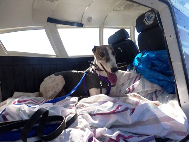 Animal lover charters private plane to rescue greyhound that waited a year for a loving home