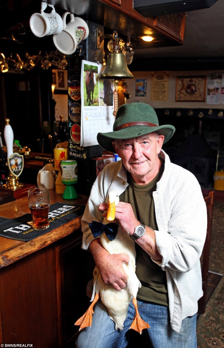 "Barry Hayman with his pet Star the duck who has seemingly been injured in a pub brawl. See SWNS story SWDUCK; A Devon duck who received worldwide fame for his drinking exploits has suffered serious injuries after a near-death encounter with a dog. Star Hayman and his handler Barrie Hayman are well known across the county. On Sunday Star had a run in with a dog and came away from the altercation with his bottom beak split down the middle. The owners of the dog, Meggie, posted on Facebook Star had ""pushed his luck too far."""