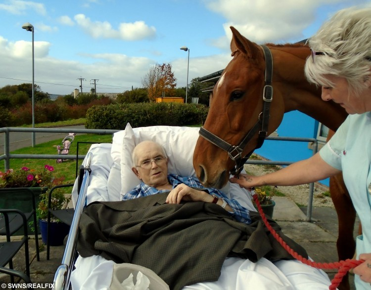 Caring nurses at Bodmin Hospital in Cornwall granted a man his dying wish when they arranged for his favourite horse to visit him days before he passed away. See swns story SWHORSE. Cancer patient Frank Keat died peacefully on Monday (26th Oct) night but, last Friday, to his great surprise, his ?ve-year-old horse, Early Morn, appeared on the patio outside his hospital ward. Staff nurse Samantha Russell said it was an emotional time for everyone. ÃI can honestly say that this is the most memorable day of my career. The emotion was overwhelming and there wasn't a dry eye on the ward,Ã she said. ÃEarly Mom is a horse that Frank broke himself and he so wanted to see him again. ÃSadly, he was not well enough to visit the stable, so the nursing team came up with the fantastic idea of arranging for his horse to be brought to the hospital without him knowing. ÃWe wheeled his bed out on to the patio where he was greeted by his beautiful horse. ÃFrank was just overwhelmed and speechless.Ã Caring nurses at Bodmin Hospital in Cornwall granted a man his dying wish when they arranged for his favourite horse to visit him days before he passed away. See swns story SWHORSE. Cancer patient Frank Keat died peacefully on Monday (26th Oct) night but, last Friday, to his great surprise, his Ãve-year-old horse, Early Morn, appeared on the patio outside his hospital ward. Staff nurse Samantha Russell said it was an emotional time for everyone. ÃI can honestly say that this is the most memorable day of my career. The emotion was overwhelming and there wasn't a dry eye on the ward,Ã she said. ÃEarly Mom is a horse that Frank broke himself and he so wanted to see him again. ÃSadly, he was not well enough to visit the stable, so the nursing team came up with the fantastic idea of arranging for his horse to be brought to the hospital without him knowing. ÃWe wheeled his bed out on to the patio where he was greeted by his beautiful horse. ÃFrank was just overwhelmed and speechless.Ã